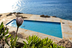 Swimming pool, sea and flower Stock Images