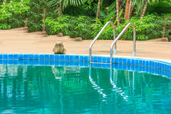 Swimming pool with stair at hotel Stock Photos