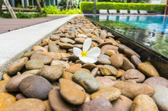 Swimming pool. With stone and flower Stock Image