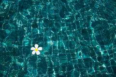 Swimming pool with sunny reflections Stock Image