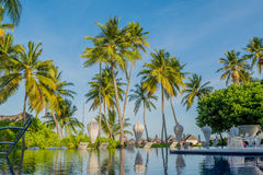 Swimming pool surrounded by palm trees at the tropical resort at Maldives Royalty Free Stock Images