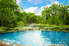 Swimming pool surrounded by tropical plants Stock Photo