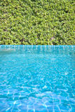 Swimming pool with tree wall. Bright and clear swimming pool as background Stock Images