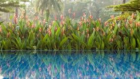 Swimming pool beside a tropical  garden Stock Photos