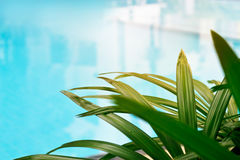 Swimming pool in tropical palm trees garden Royalty Free Stock Images