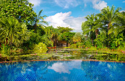 Swimming pool with tropical plants Royalty Free Stock Photos