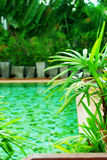 Swimming Pool Tropical Resort Vacation Travel. Beautiful Swimming Pool Green Plants Tropical Resort Vacation Travel Phuket Thailand Background Copy Space Stock Photo