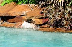 Swimming pool waterfall Royalty Free Stock Photos