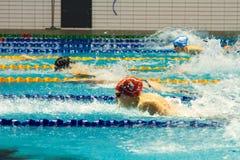 Swimming pool . Royalty Free Stock Photos