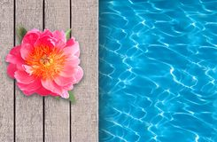 Swimming pool, wooden deck and beautiful flower Royalty Free Stock Image