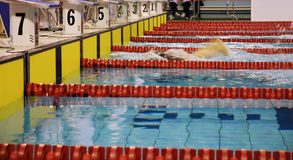 Swimming race. Swimmer swimming in butterfly stroke with goggles Royalty Free Stock Photo