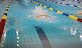 Swimming race. Swimmer swimming in butterfly stroke with goggles Stock Images