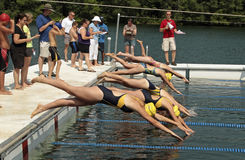 Swimming Race Diving Meet Royalty Free Stock Images