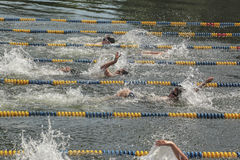 Swimming Race Stock Photos