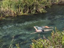 Swimming in river, bathing, river and reed stock images