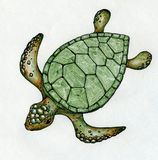 Swimming sea turtle. With green shell. Drawn with colored pens on paper Stock Images