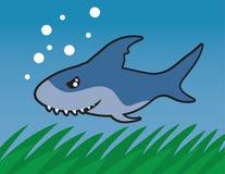 Swimming Shark Royalty Free Stock Photo