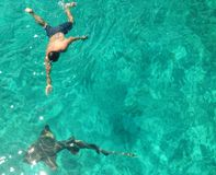 Swimming with shark. Man swimming with a nurse shark in the Bahamas in staniel Kay Stock Image