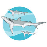 Swimming Sharks Background Stock Photos