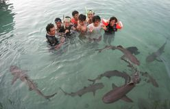 Swimming with sharks Royalty Free Stock Image