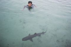 Swimming with sharks Stock Image