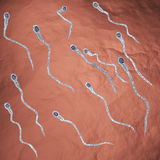 Swimming sperm Royalty Free Stock Photos