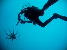 Swimming squid with diver. Squid was swimming in the ocean that it perfect time for take a great shot of it Royalty Free Stock Photo