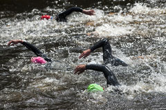 Swimming at triathlon. Group people in wetsuit swimming at triathlon Stock Images