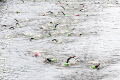 Swimming at triathlon Stock Photography