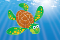 Swimming Turtle Stock Image