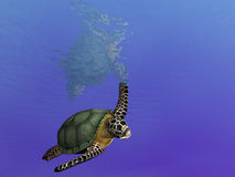 Swimming About Turtle. Render of undersea turtle making a turn Stock Image