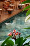 Swimmingpool, Mauritius Lizenzfreies Stockfoto