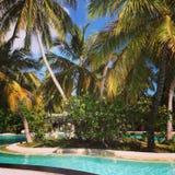 Swimmingpool mit blauem Wasser und grünen Palmen Stockfotografie