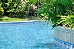 Swimmingpool und Grünpflanze arround Stockbild