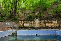 Swimmingpool W lesie Zdjęcia Royalty Free