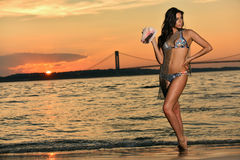 Swimsuit model posing at ocean beach location wearing sexy bikini and fishnet. And holding big pink shell Royalty Free Stock Images
