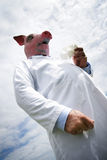 swine гриппа Стоковое Фото