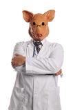 Swine Flu metaphore Royalty Free Stock Photography