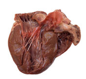 Swine heart Stock Images