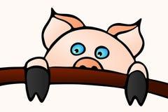 Swine Oink Stock Image