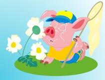 Swine Stock Image