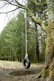 Swing. A rubber tyre swing hanging from a tree on a rope Royalty Free Stock Photography