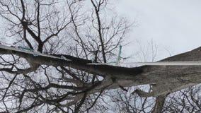 Swing on a big old oak.  stock footage