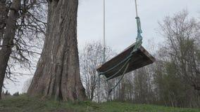Swing on a big old oak.  stock video footage