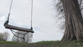 Swing on a big old oak.  stock video