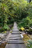 Swing Bridge in the rain forest Stock Photography