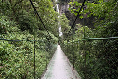 Swing bridge in the rainforest Stock Photography