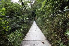 Swing bridge in the rainforest Royalty Free Stock Image