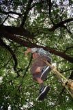 swing för barnskrattspelrum Royaltyfria Foton