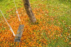 Swing in the garden. With orange flowers   that fall in green lawn Stock Image
